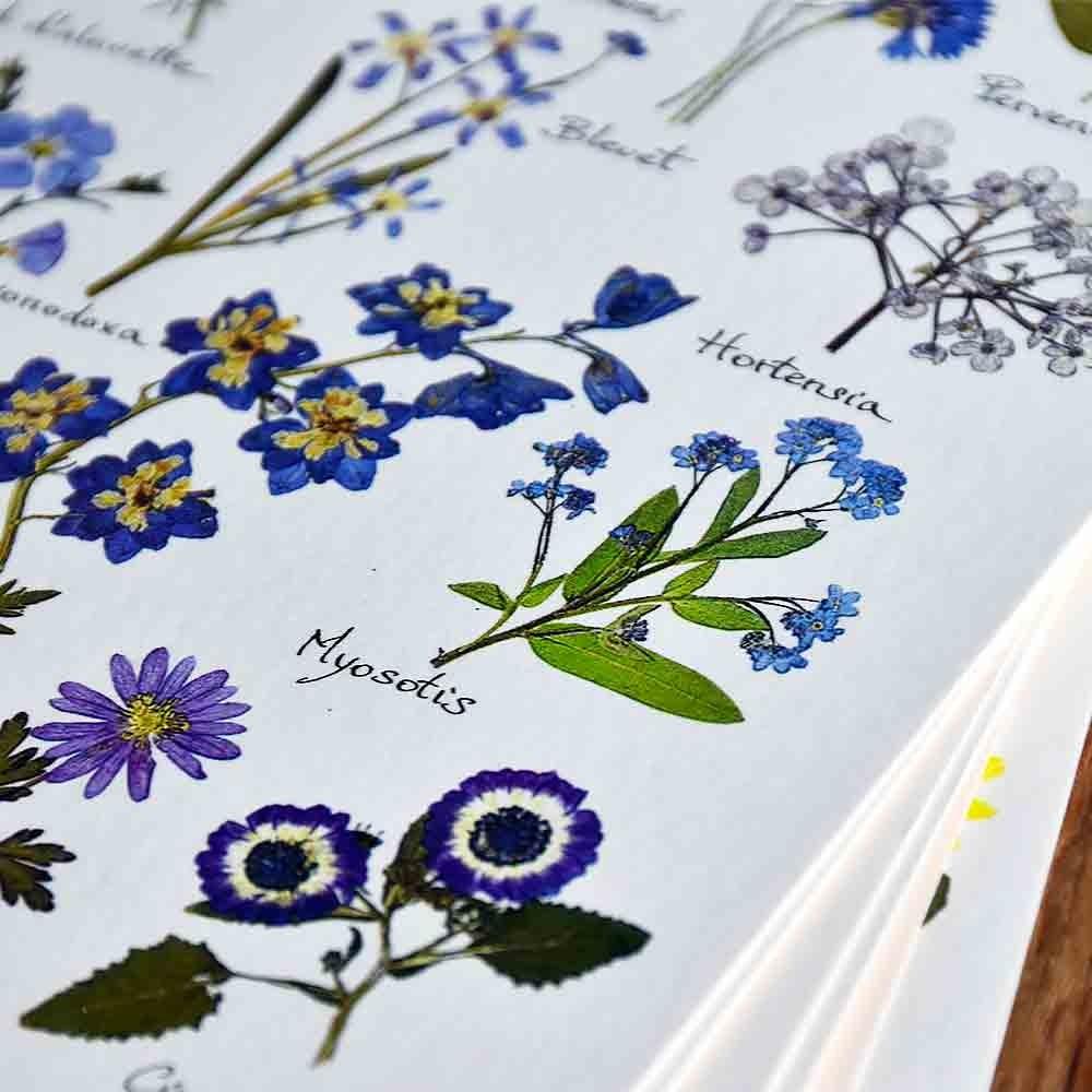 carte-postale-herbier